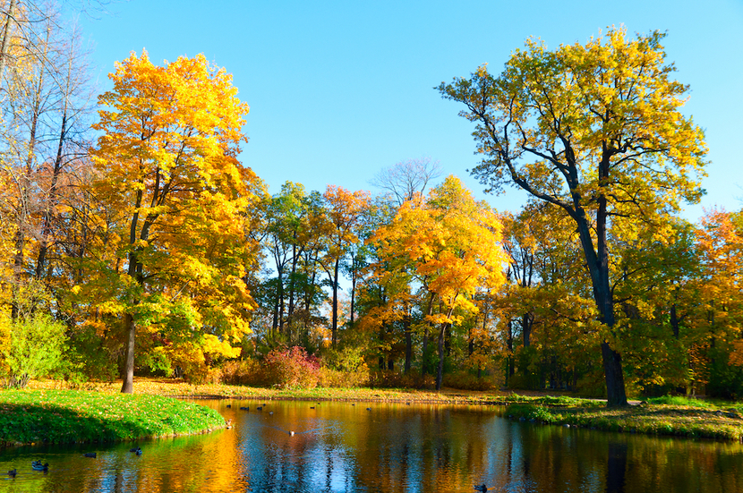 Picture of a city park in Aurora, IL with pond and large trees in the fall.